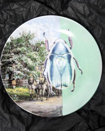 Beetle Plate // House Of Fiv5