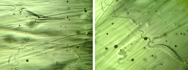 House of Formlab Real vs Fake Moldavite Example of Natural Inclusions in Real Moldavite